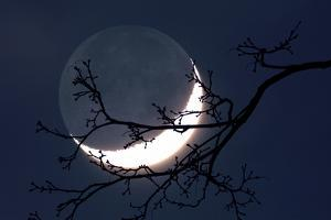Crescent Moon with Earthshine by Detlev Van Ravenswaay