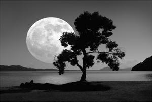 Moon Rising Over the Sea by Detlev Van Ravenswaay