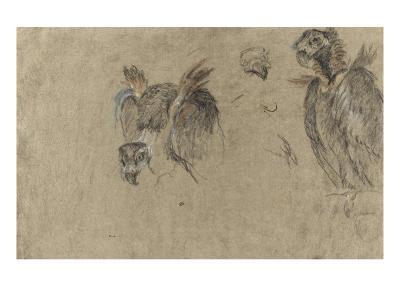 Deux études de vautour et deux détails-Pieter Boel-Giclee Print