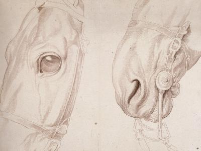 Deux études partielles d'une tête de cheval bridée-Edme Bouchardon-Giclee Print