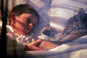 Deux Freres Two Brothers De Jeanjacquesannaud Avec Freddie Highmore, Le Petit Tigre Sangha, 2004