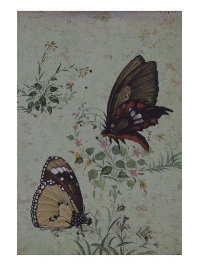 Deux papillons parmi les fleurs--Giclee Print
