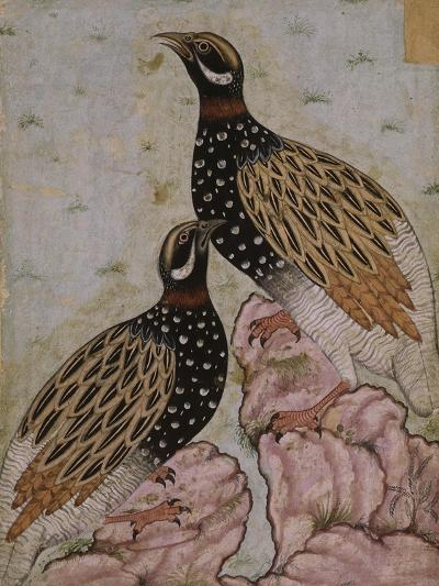 Deux perdrix sur des rochers--Giclee Print