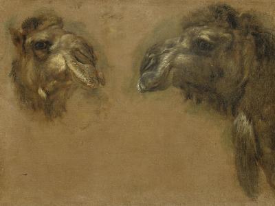 Deux têtes de dromadaires-Pieter Boel-Giclee Print