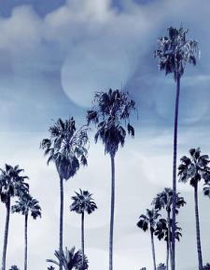 Beach Palms Indigo I by Devon Davis