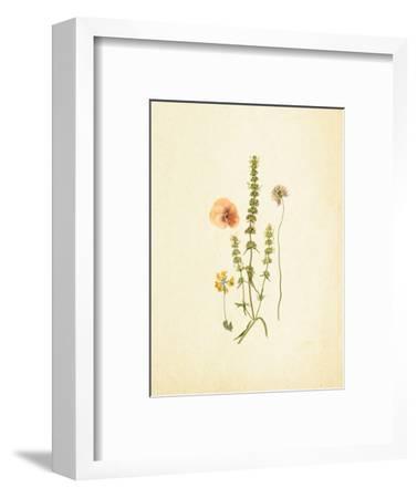 French Herbarium 4