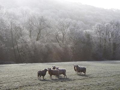 https://imgc.artprintimages.com/img/print/devon-sheep-exe-valley-devon-england-united-kingdom-europe_u-l-pfnj7l0.jpg?p=0