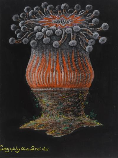 Devonshire Cup Coral-Philip Henry Gosse-Giclee Print