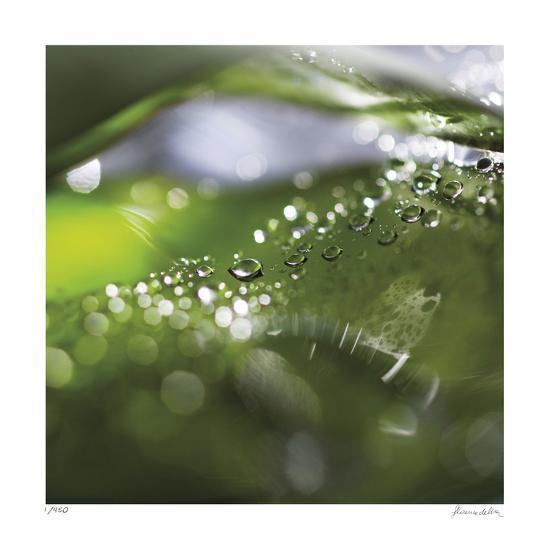 Dew Drops 5-Florence Delva-Giclee Print