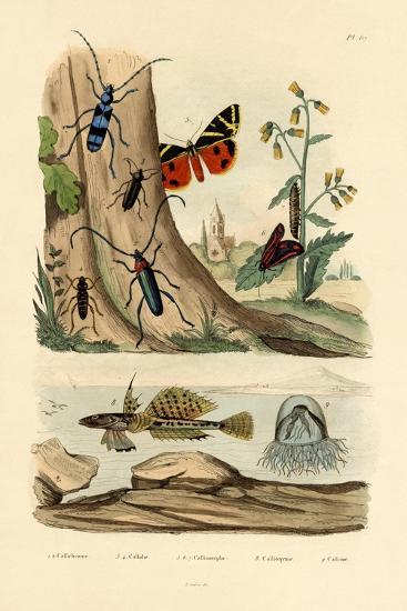 Dew Moth, 1833-39--Giclee Print