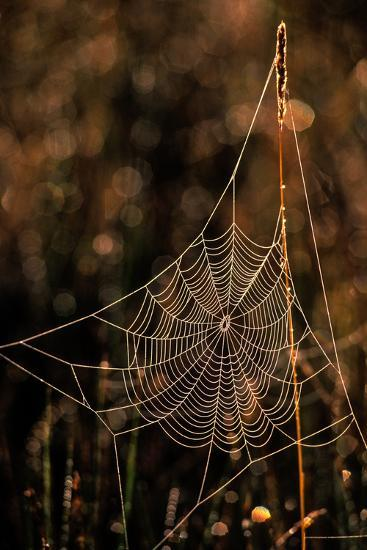Dew on a Spider Web-Tom Murphy-Photographic Print