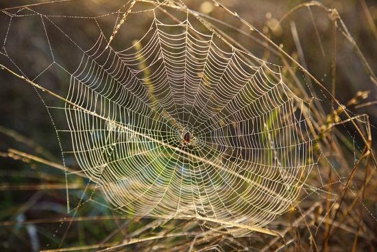 Dew on Spider Web on Mt. Hood-Craig Tuttle-Photographic Print