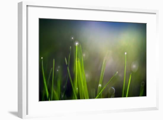 Dew-Ursula Abresch-Framed Photographic Print