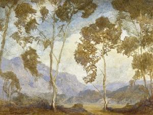 Eucalyptus by DeWitt Parshall