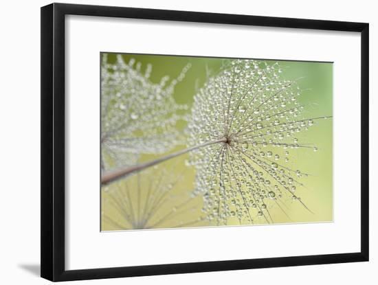 Dewy Dandelion-Cora Niele-Framed Photographic Print