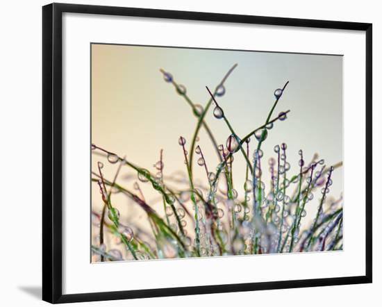 Dewy Grass-Cora Niele-Framed Photographic Print