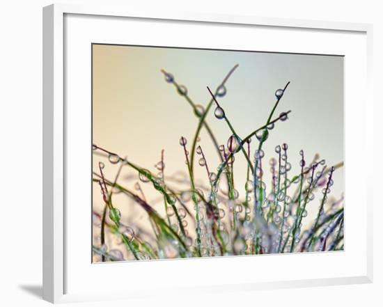 Dewy Grass-Cora Niele-Framed Photographic Print