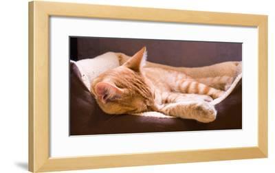 Sleeping Orange Cat in Cat Bed