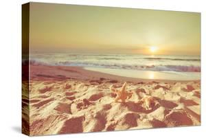 Starfish and Shells on the Beach at Sunrise by Deyan Georgiev