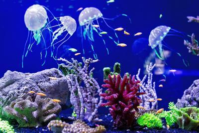 Beautiful Jellyfish, Medusa in the Neon Light with the Fishes. Aquarium with Blue Jellyfish and Lot
