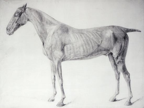 Diagram From The Anatomy Of The Horse Giclee Print By George Stubbs