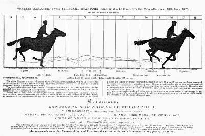 Diagram of a Horse in Motion-Eadweard Muybridge-Giclee Print