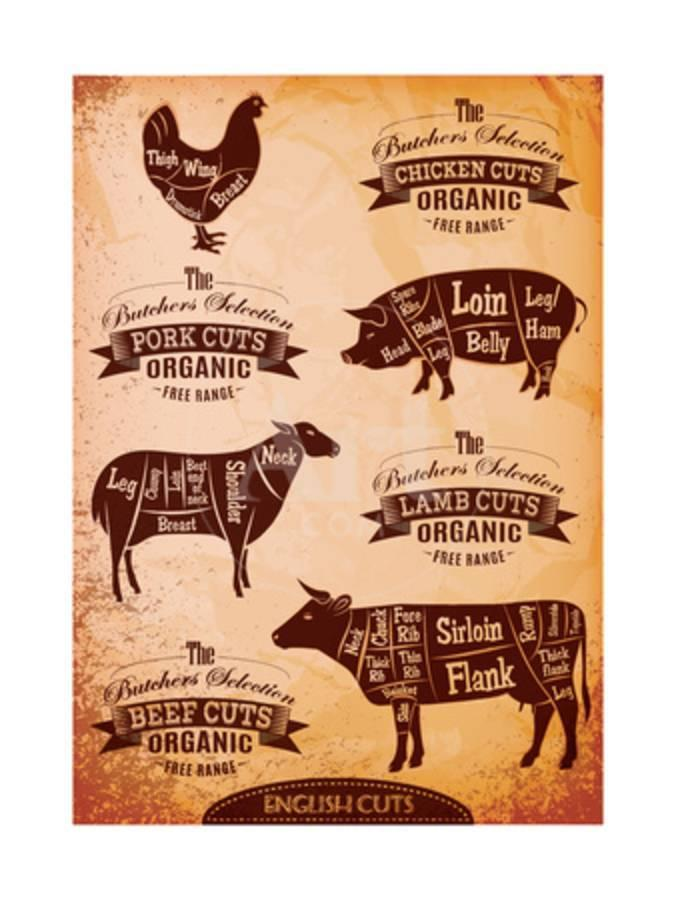 Diagram Of Cut Carcasses Chicken Pig Cow Lamb Art Print By Cuts Beef 111chemodan111