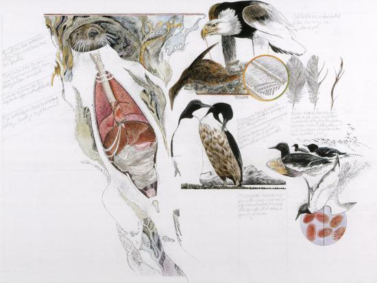 Diagram of the Effects of Oil and Oil Spills on Wildlife-Jack Unruh-Photographic Print