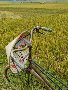 Bicycle and Coolie Hat in Ricefields on Outskirts of Hanoi by Diana Mayfield