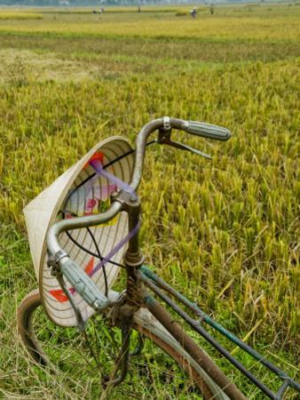 Bicycle and Coolie Hat in Ricefields on Outskirts of Hanoi