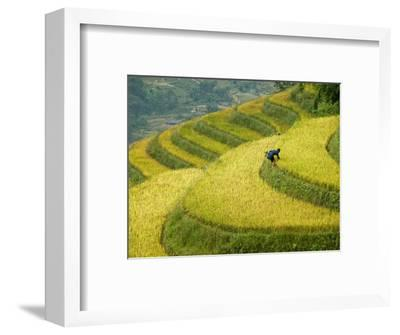 Black H'Mong Woman in Rice Field Terraces Near Tafen Village