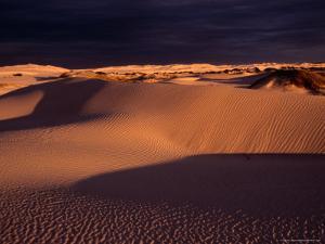 Dunes at Sunrise - Great Australian Bight, South Australia, Great Australian Bight, Australia by Diana Mayfield