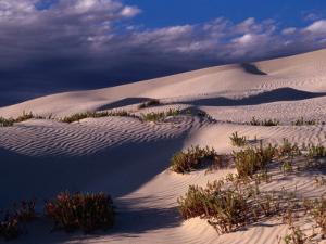 Dunes of the Great Australian Bight, Australia by Diana Mayfield