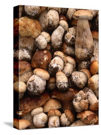 Field Mushrooms for Sale by Roadside Near Cluj-Napoca, Cluj-Napoca, Cluj, Romania,
