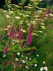 Flowers Near Il Tudy, Brittany, France by Diana Mayfield