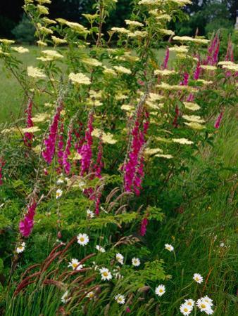 Flowers Near Il Tudy, Brittany, France