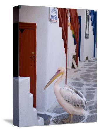 Pelican Standing in Alleyway, Mykonos Island, Southern Aegean, Greece