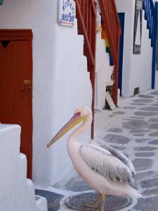 Pelican Standing in Alleyway, Mykonos Island, Southern Aegean, Greece by Diana Mayfield