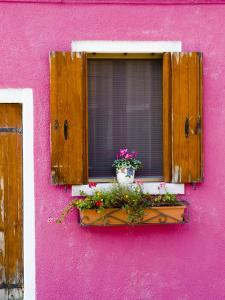 Pot Plant and Vividly Painted Facade, Burano by Diana Mayfield