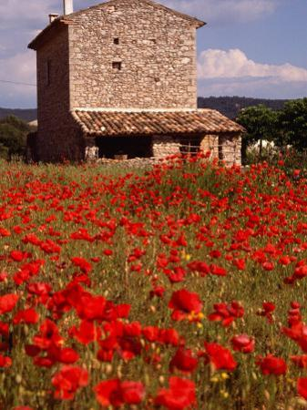 Stone Farmhouse in Field of Poppies, Provence-Alpes-Cote d'Azur, France