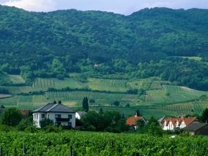 Village of Pfaffstatten Amongst Vineyards with Vienna Woods Behind, Near Baden, Austria by Diana Mayfield