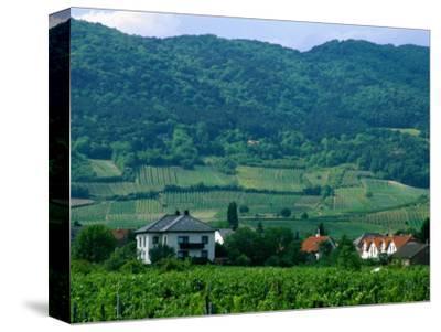 Village of Pfaffstatten Amongst Vineyards with Vienna Woods Behind, Near Baden, Austria