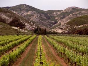 Vineyard and Typical Alpilles Landscape Near Mausanne, Provence-Alpes-Cote d'Azur, France by Diana Mayfield