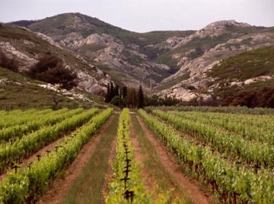 Vineyard and Typical Alpilles Landscape Near Mausanne, Provence-Alpes-Cote d'Azur, France