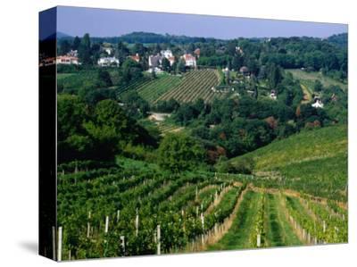 Vineyards along Kahlenburg Strasse, Near Wine Village of Nussdorf, Vienna, Austria