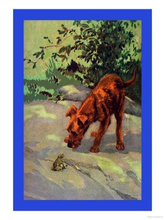 Irish Terrier Puppy