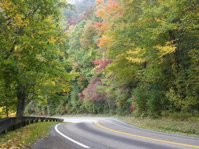 Fall Foliage on Newfound Gap Road, Great Smoky Mountains, Tennessee, USA