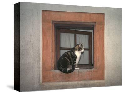 Cat Sitting on a Window Ledge