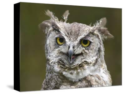 Close-Up of an Owl