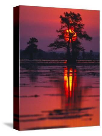 Cypress Swamp at Sunrise, Texas, USA
